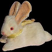 Tiny Old White Bunny Rabbit