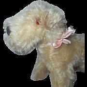 White Mohair Terrier Dog c1930