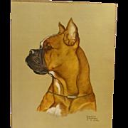 Boxer Dog Portrait Signed Print Gladys Emerson Cook c. 1948