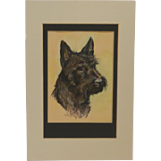 """Blackie"" Scottish Terrier Portrait by Ole Larsen Calendar Page c. 1030-1940"