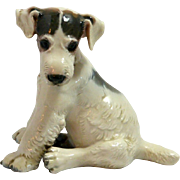 Wire-Haired Fox Terrier Puppy Prof. T. Karner Germany c.1940's