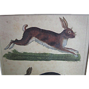 French Print, Rabbits Colored Lithograph Book Plate, 1830