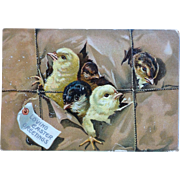 Easter Postcard Chicks pecking way out of Package Cute!