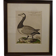 Bird Print - Framed Waterfowl Antique Repro 3 of 7