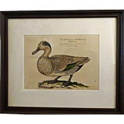 Bird Print - Framed Waterfowl Antique Repro 4 of 7