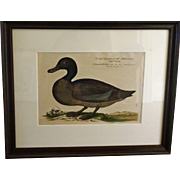 Bird Print - Framed Waterfowl Antique Repro 6 of 7