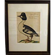 Bird Print - Framed Waterfowl Antique Repro 7of 7