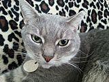 Gray Cat Jewelry