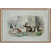 French Color Engraving Rabbits Le Lapin Édouard TRAVIES del,  Beyer sculpt - 19th Century, France - Red Tag Sale Item