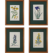 Set of 4 English Botanical Engravings Hand Colored, Matted and Framed- 19th Century, England - Red Tag Sale Item