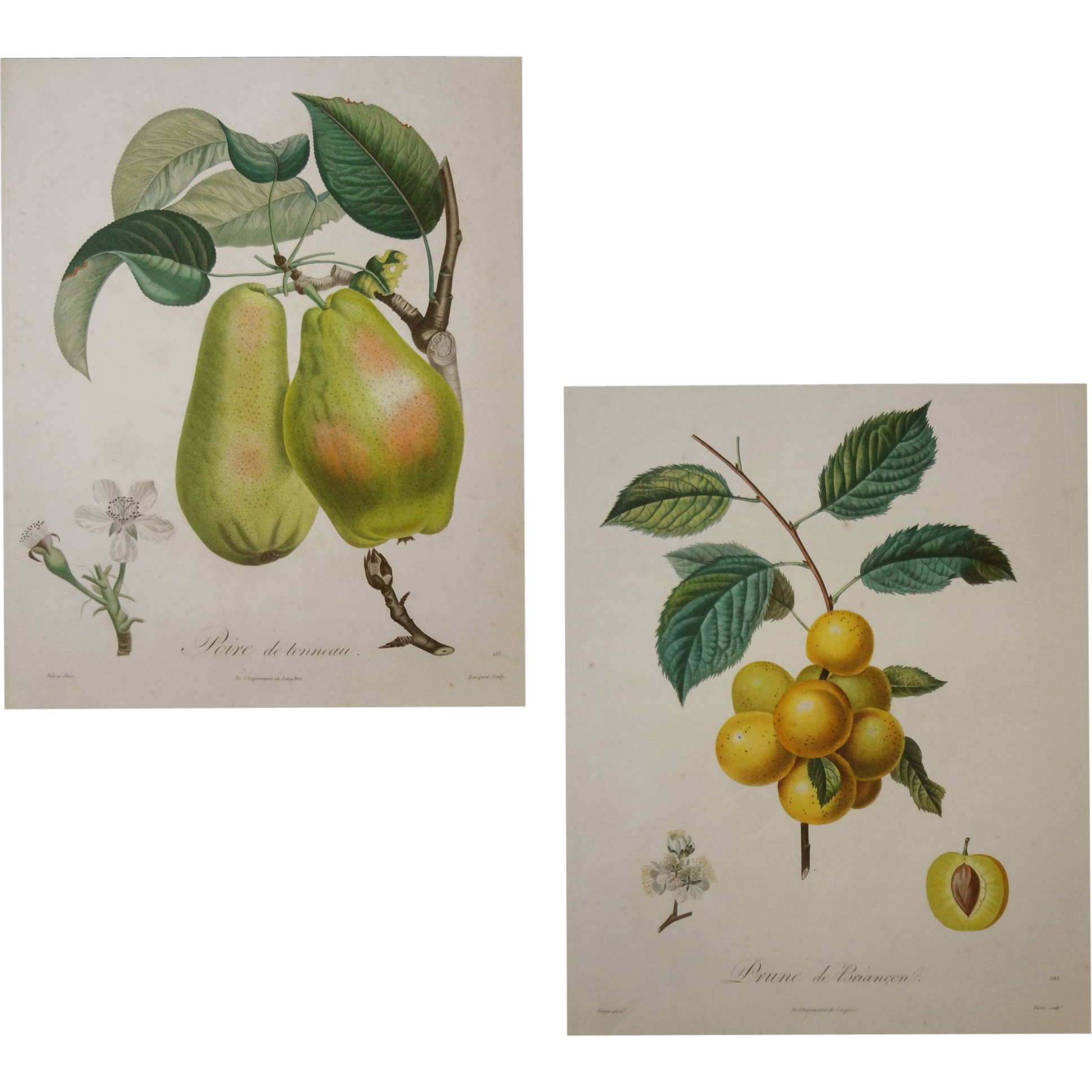 Pair Early French Botanical Stipple Engravings Pears and Plums - c. 1807-1835, France