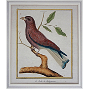 "Antique French Bird Engraving Le Rolle de Madagascar  from ""Histoire Naturelle des Oiseaux"" Martinet & Buffon"