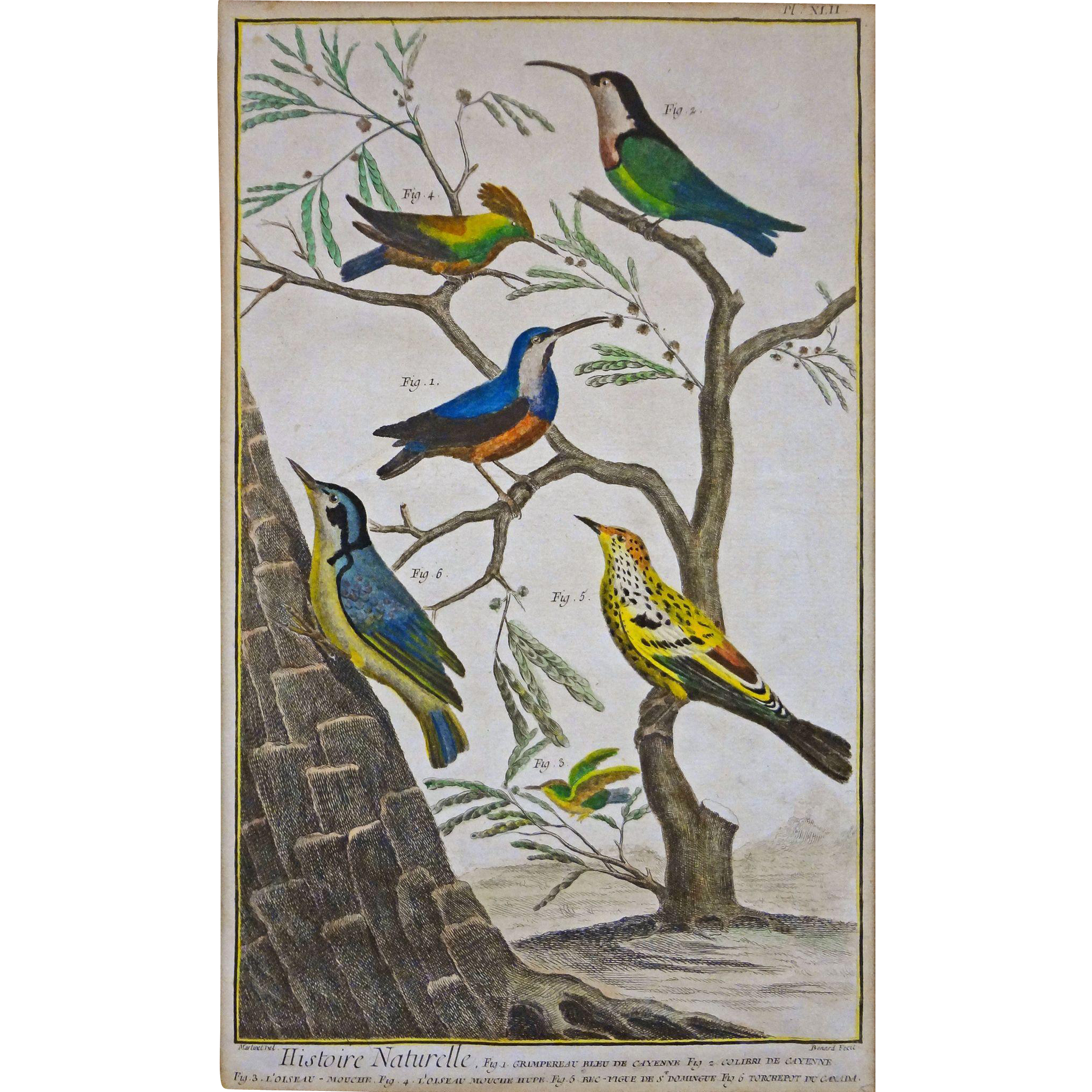 "Antique Engraving of Birds Plate XLII from ""Histoire Naturelle"" by Benard after Martinet - c. 1768, France"