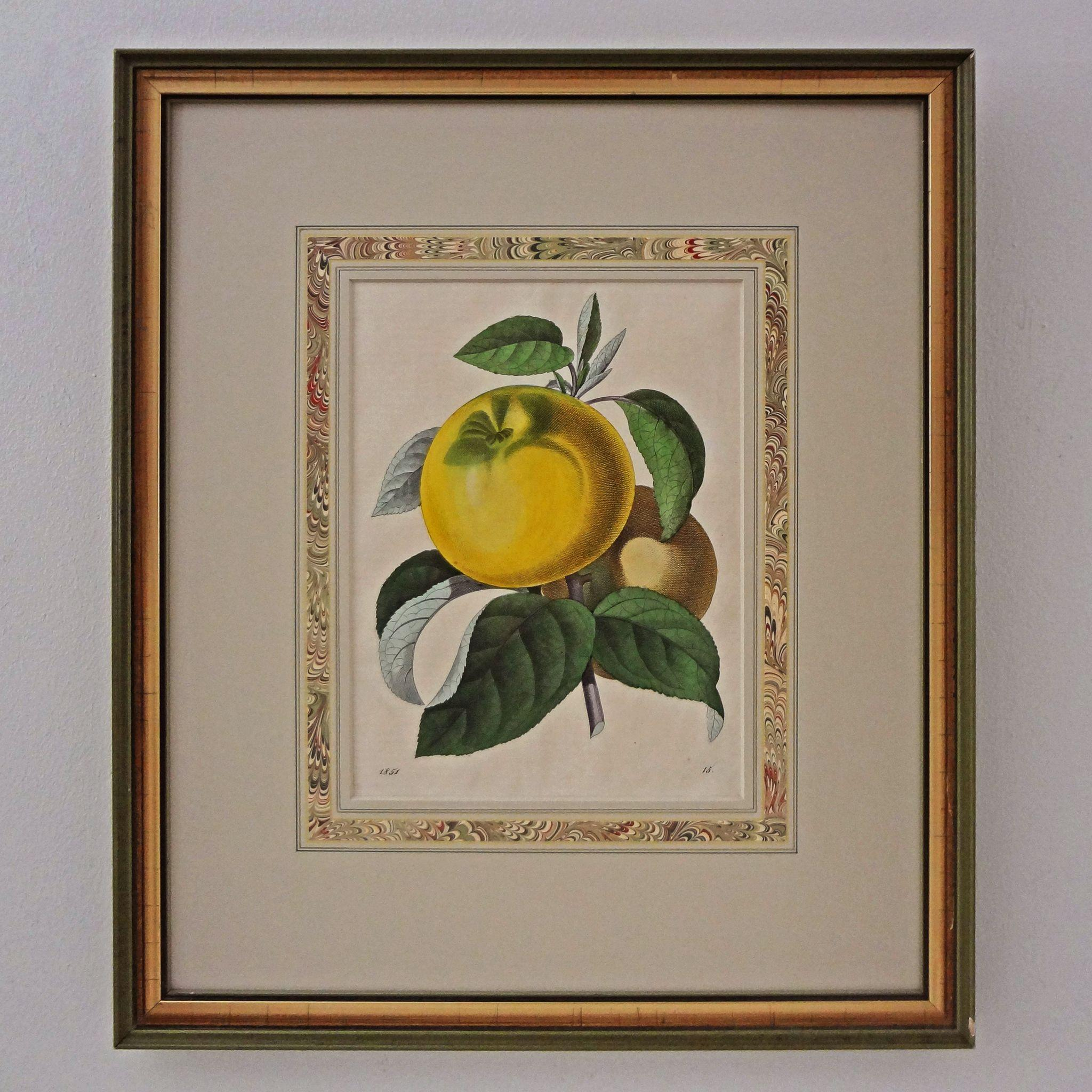 Antique Botanical Yellow Fruit Color Engraving Matted