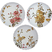 Set 3 George Jones Chrysanthemum Plates English Registry Mark - 1885 Registry Date, England