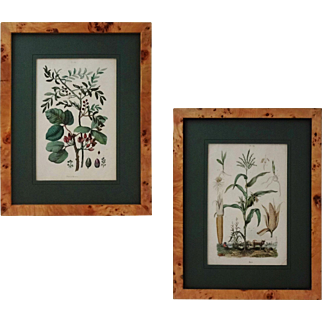 Pair Antique French Botanical Engravings Pistachio and Maize - 19th Century, France