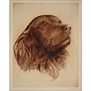 Dog Portrait Irish Setter Sepia Etching signed Orie Van Rye - 1963, Massachusetts