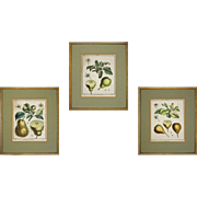 Set 3 Early French Botanicals Pears Duhamel du Monceau Laid Paper Framed - 18th Century, France