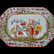 Ashford Bros Asian Birds Large Platter Transferware Multicolor Pattern C221 - 19th Century, England