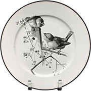 Pierre Mallet Brown Transferware ORNITHOLOGY Plate ~ 1870 #A