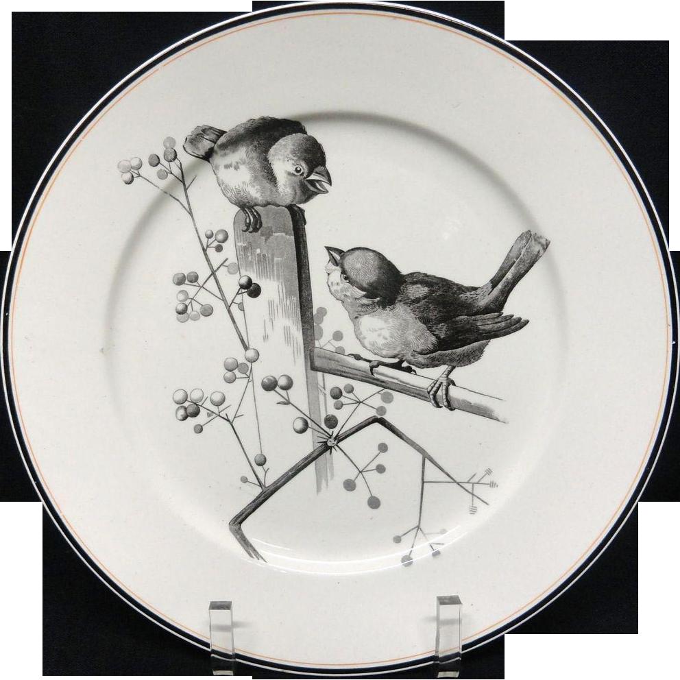 Pierre Mallet Brown Transferware ORNITHOLOGY Plate ~ 1870 #A