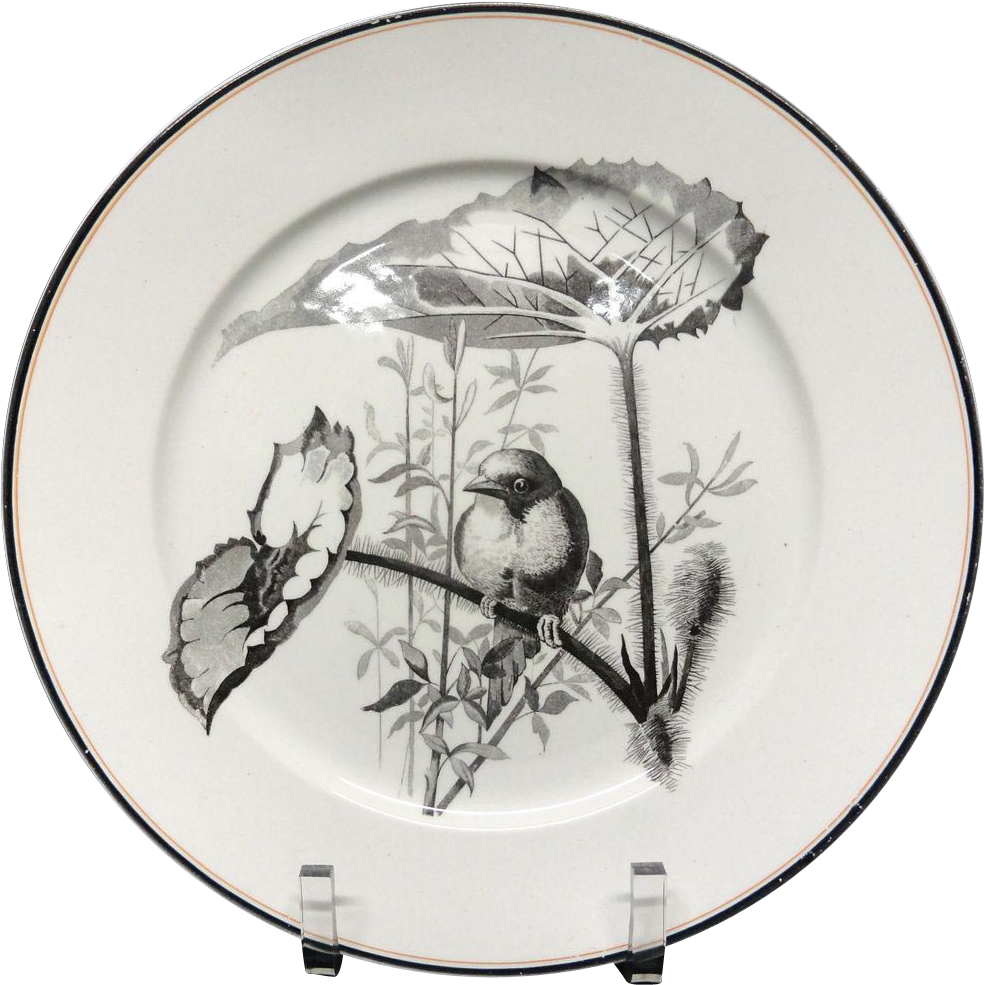 Pierre Mallet Brown Transferware ORNITHOLOGY Plate ~ 1870 #B