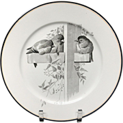 Pierre Mallet Brown Transferware ORNITHOLOGY Plate ~ 1870 #D