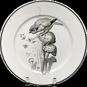 Pierre Mallet Brown Transferware ORNITHOLOGY Plate ~ 1870 #F