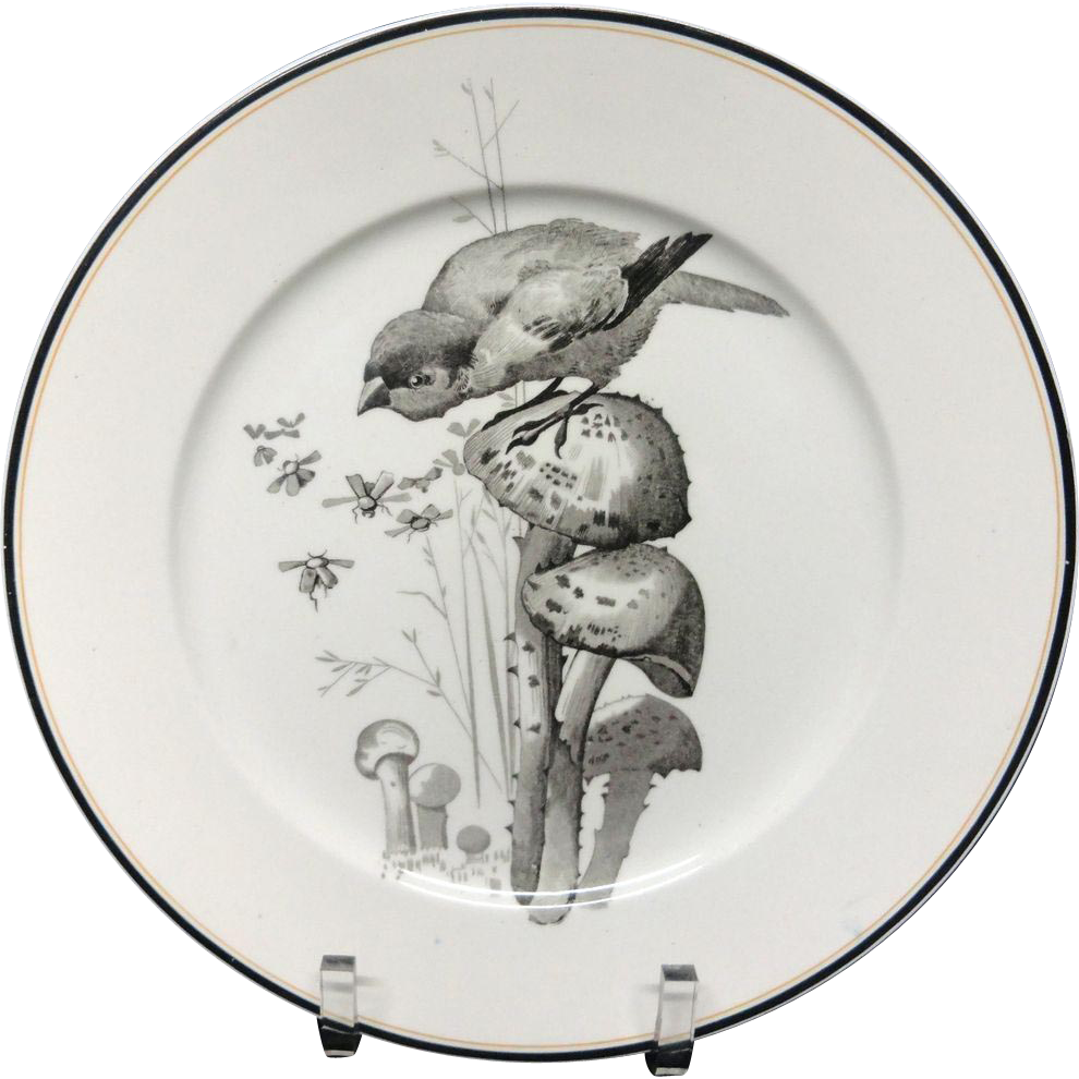 Pierre Mallet Brown Transferware ORNITHOLOGY Plate ~ 1870 #F