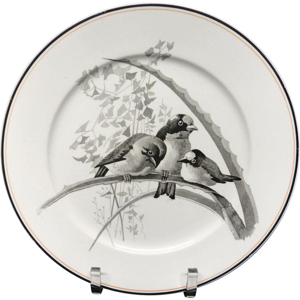 Pierre Mallet Brown Transferware ORNITHOLOGY Plate ~ 1870 #G