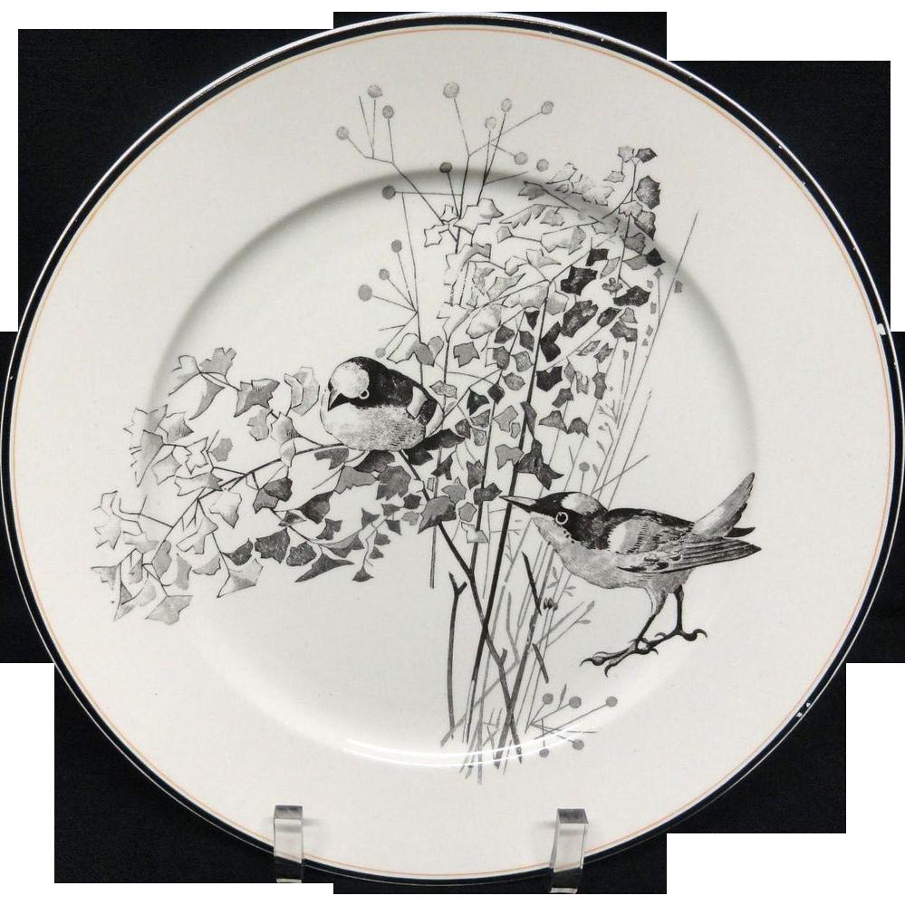Pierre Mallet Brown Transferware ORNITHOLOGY Plate ~ 1870 #H