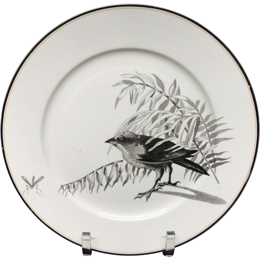 Pierre Mallet Brown Transferware ORNITHOLOGY Plate ~ 1870 #J