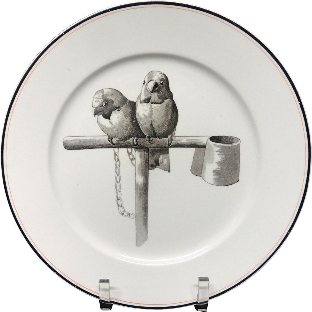 Pierre Mallet Brown Transferware ORNITHOLOGY Plate ~ 1870 #K