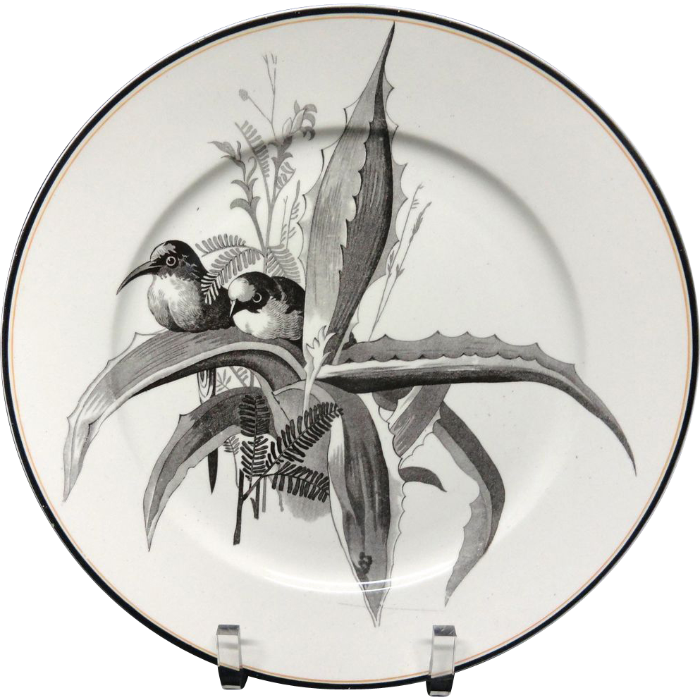 Pierre Mallet Brown Transferware ORNITHOLOGY Plate ~ 1870 #L