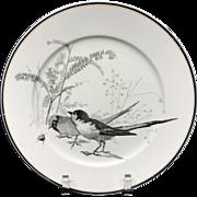 Pierre Mallet Brown Transferware ORNITHOLOGY Plate ~ 1870 #M