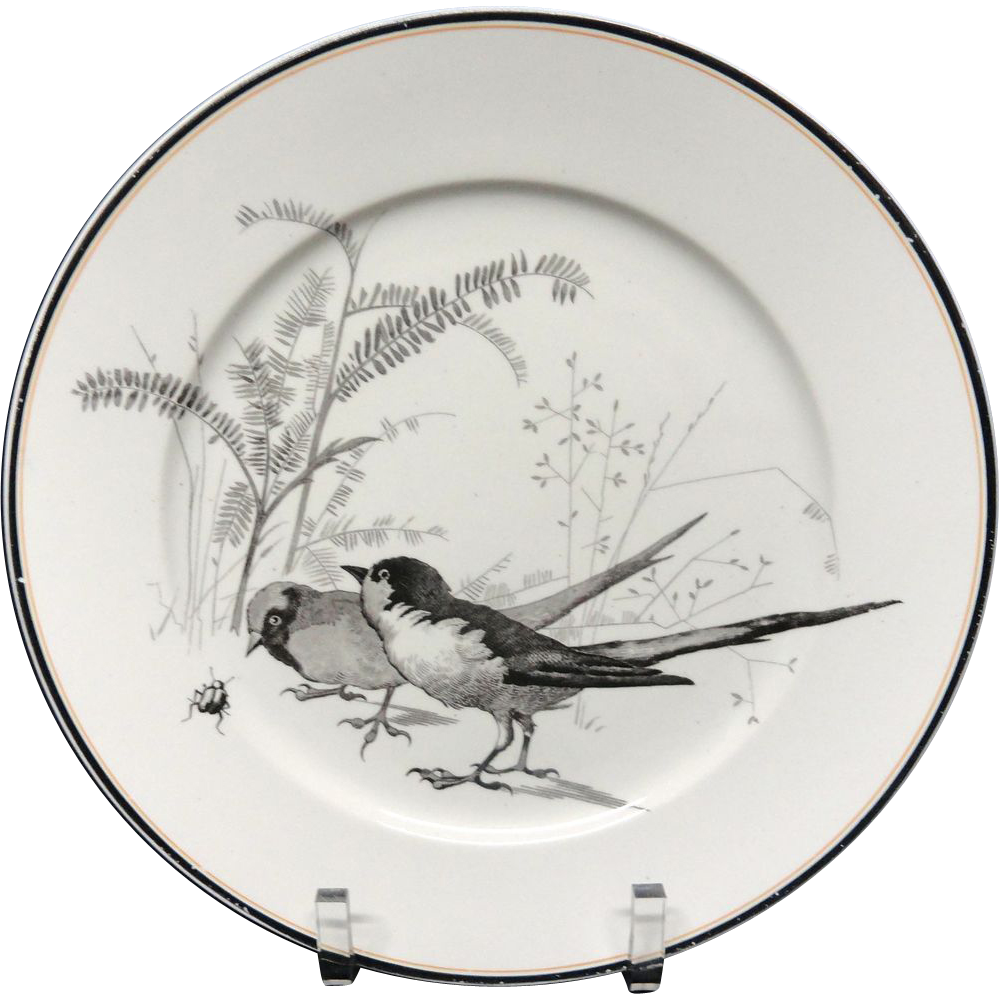 Pierre Mallet Brown Transferware ORNITHOLOGY Plate ~ 1870 #M