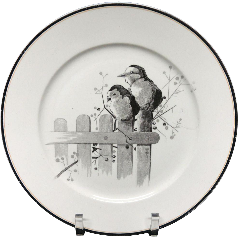 Pierre Mallet Brown Transferware ORNITHOLOGY Plate ~ 1870 #N