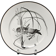 Pierre Mallet Brown Transferware ORNITHOLOGY Plate ~ 1870 #O