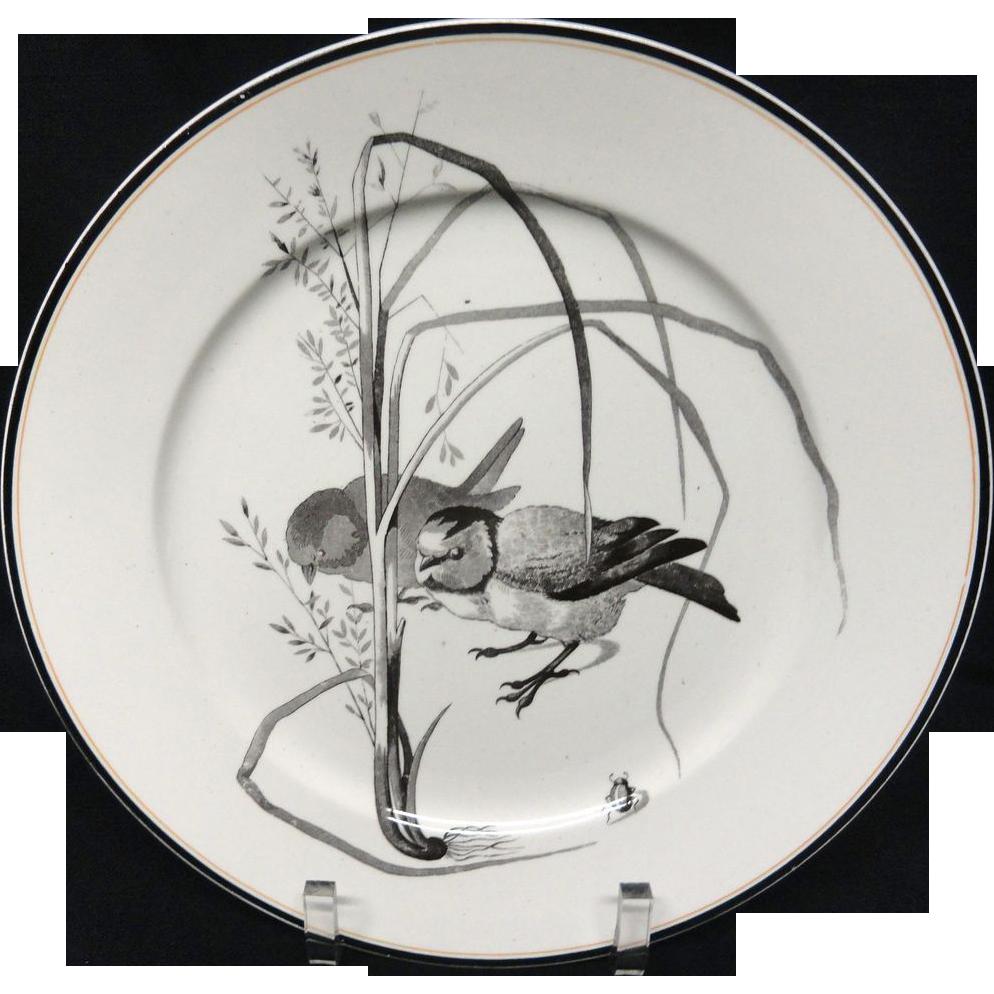 Pierre Mallet Brown Transferware ORNITHOLOGY Plate ~ 1870 #O
