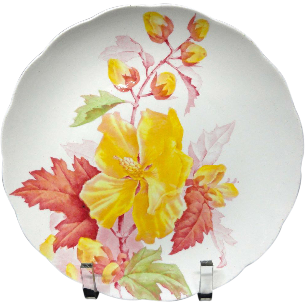 Spectacular Botanical Cabinet Plate ~ HIBISCUS 1882