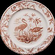 Victorian Brown Transferware Plate ~ Outrageous Birds INDUS 1885