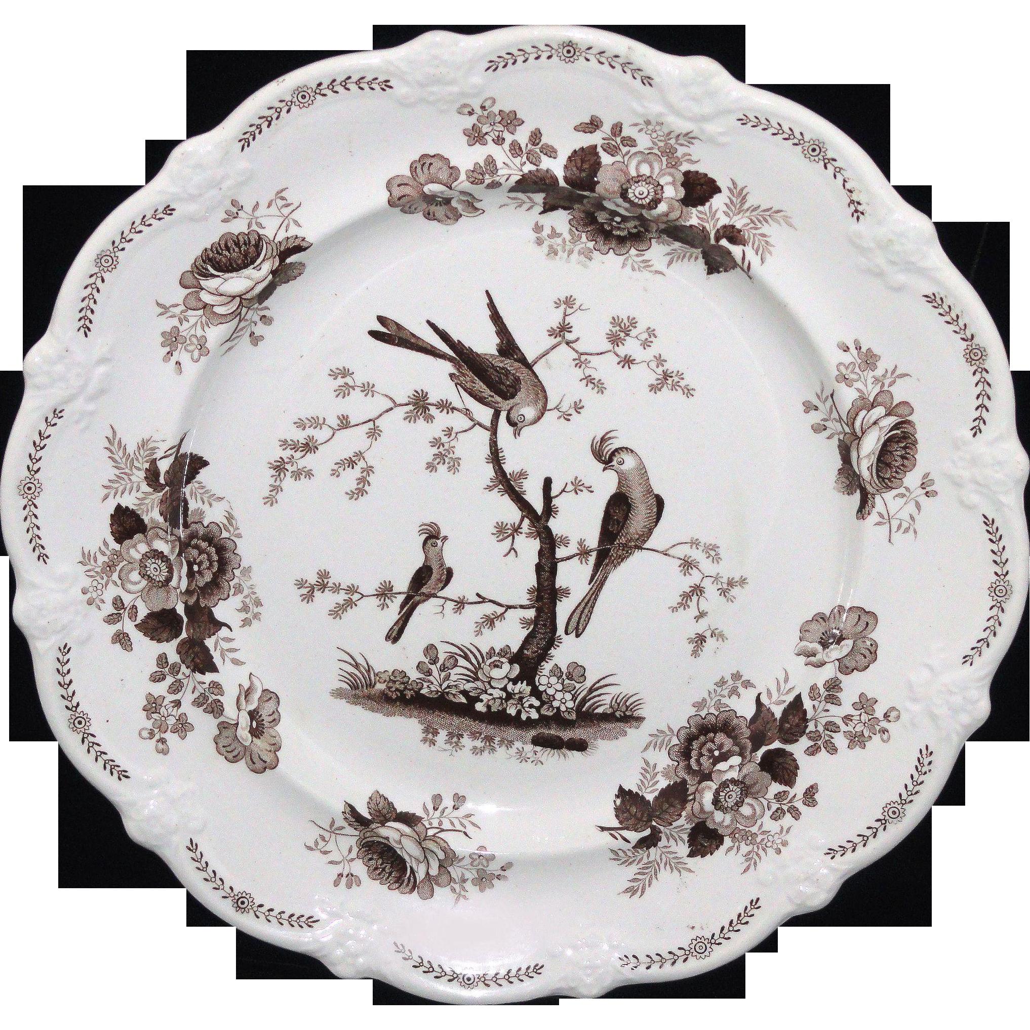 BIRD TREE Early Brown Staffordshire Dinner Plate JWR Oriental Birds c1836