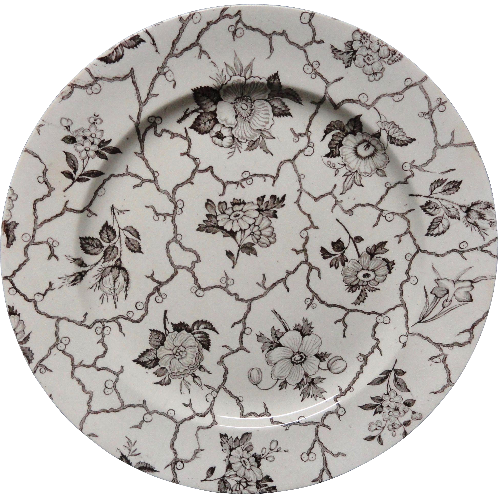 AESTHETIC MOVEMENT Brown Transferware Plate ~ Anemone c1875