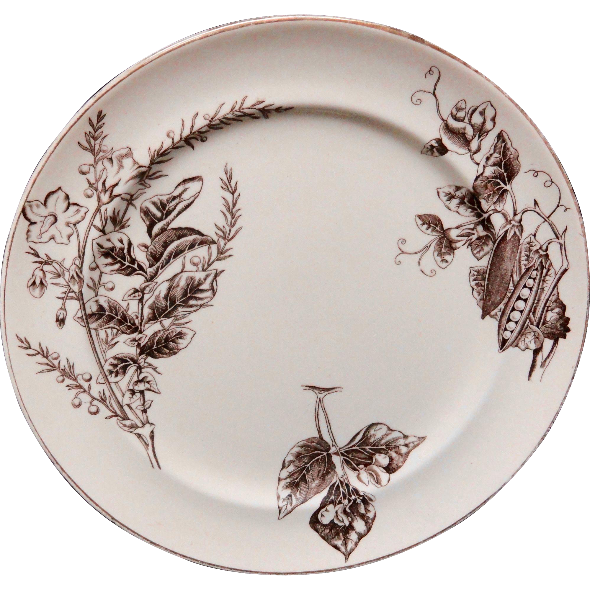 Staffordshire Transferware Brown and White Plate  ~ Garden Peas 1880
