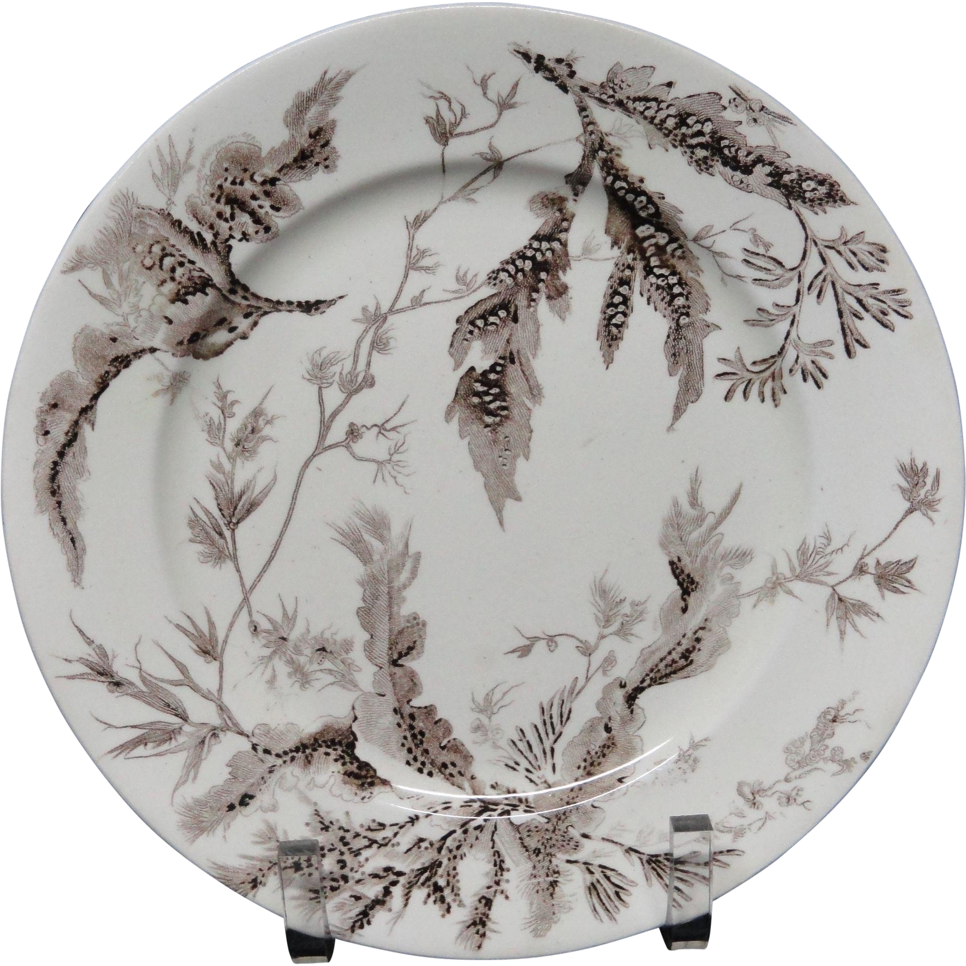 Wedgwood Brown Transfer Printed Plate ~ SEAWEED ~ 1883