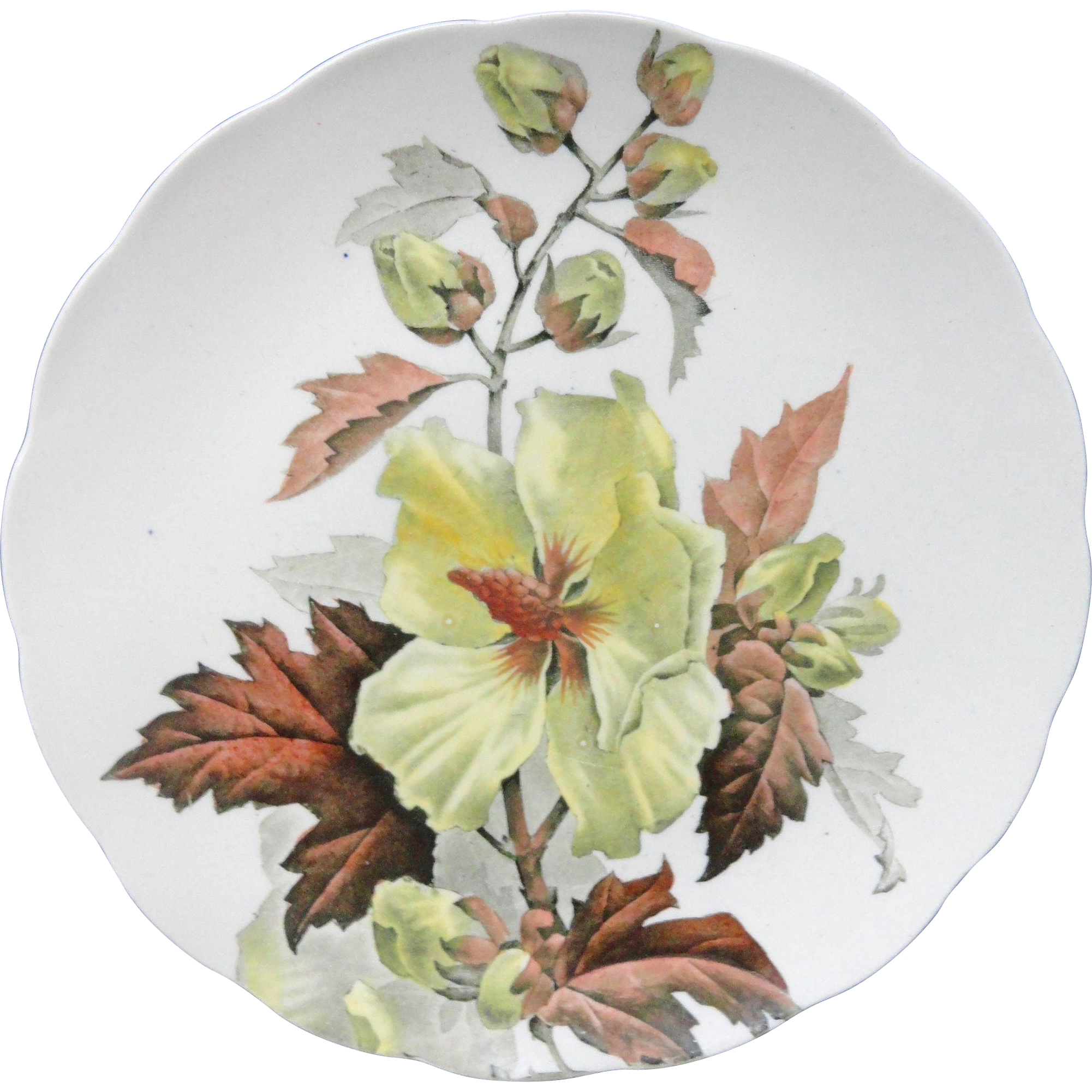 Antique Botanical Cabinet Plate ~ HIBISCUS 1882