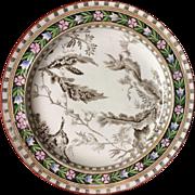Rare Hand Colored Brown Transferware Wedgwood Plate ~ SEAWEED 1883