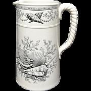 Rare  Nantasket Milk Pitcher ~ SEASHELLS 1876
