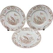 Three INDUS Exotic Birds Transferware Plates ~ 1885