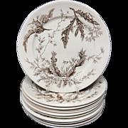 10~ Brown Wedgwood Staffordshire Dinner Plates ~ SEAWEED 1883